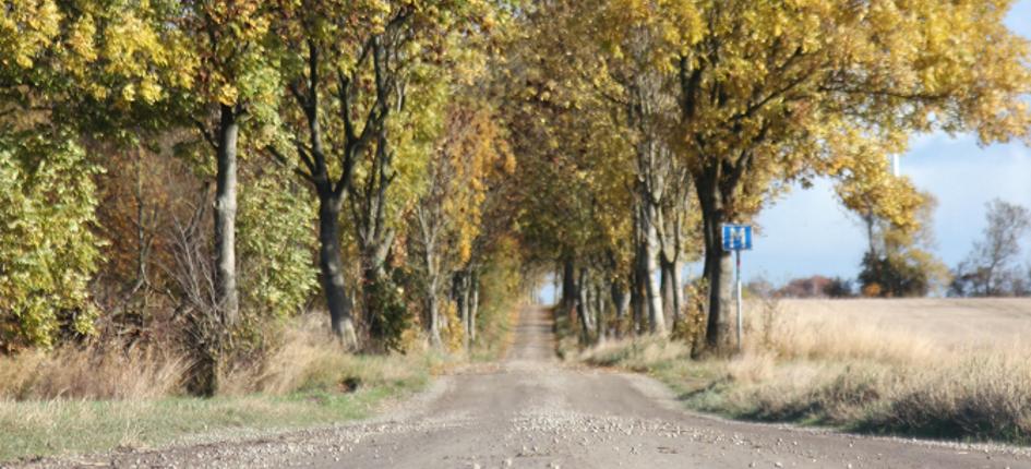 En liten Söndags löpning bland löven