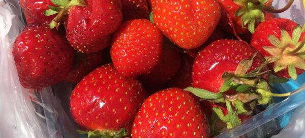 Jordgubbar och rosé